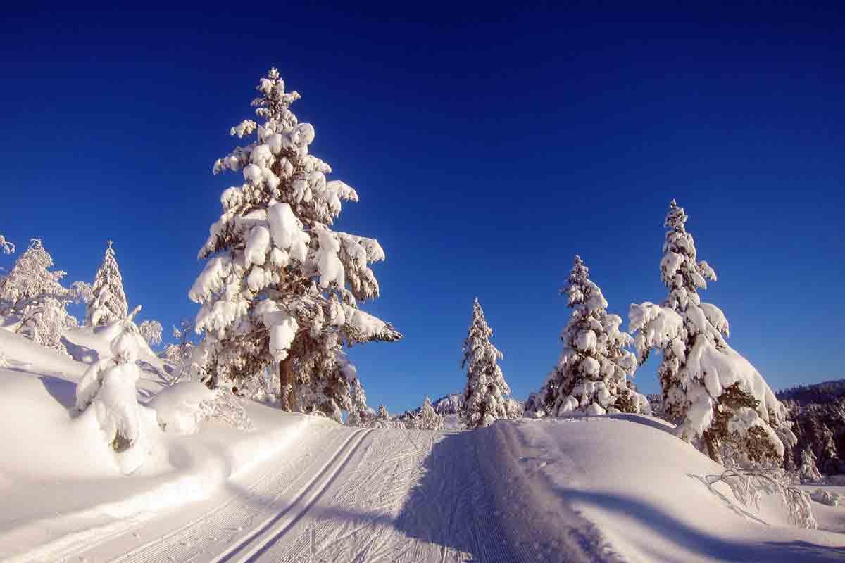 nisser-hyttegrend-vinter-og-skiloyper-2013